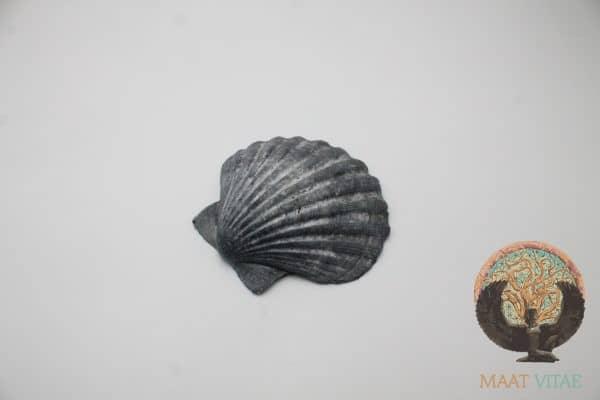Coquille Saint-Jacques Noire Bretagne - Maât Vitae