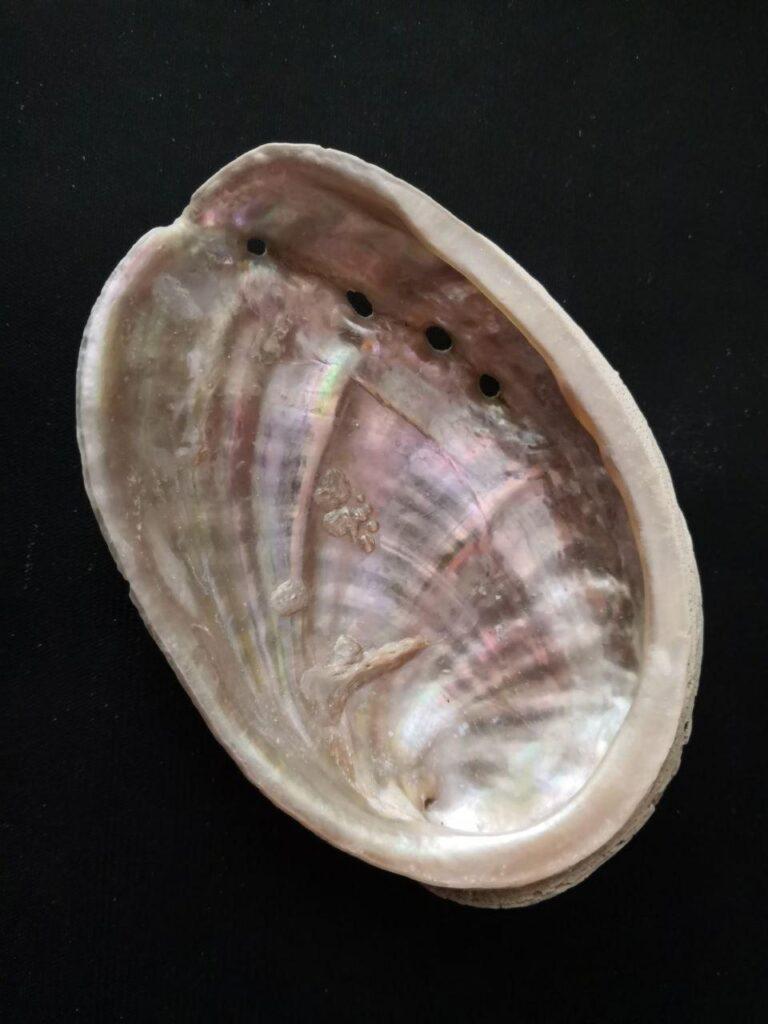 Ormeaux & Abalones