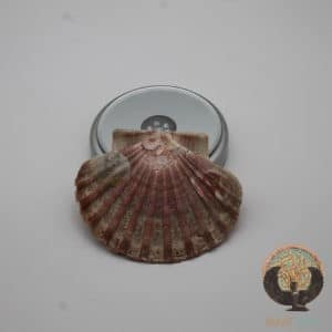 Coquille Saint-Jacques plate