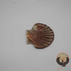 Coquille St Jacques Plate